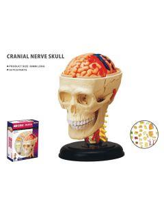 Modelo 3D - Crânio