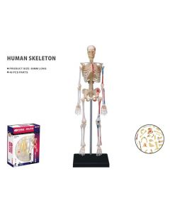 Modelo 3D - Esqueleto