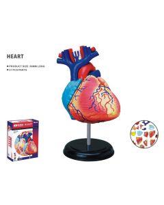 Modelo 3D - Coração